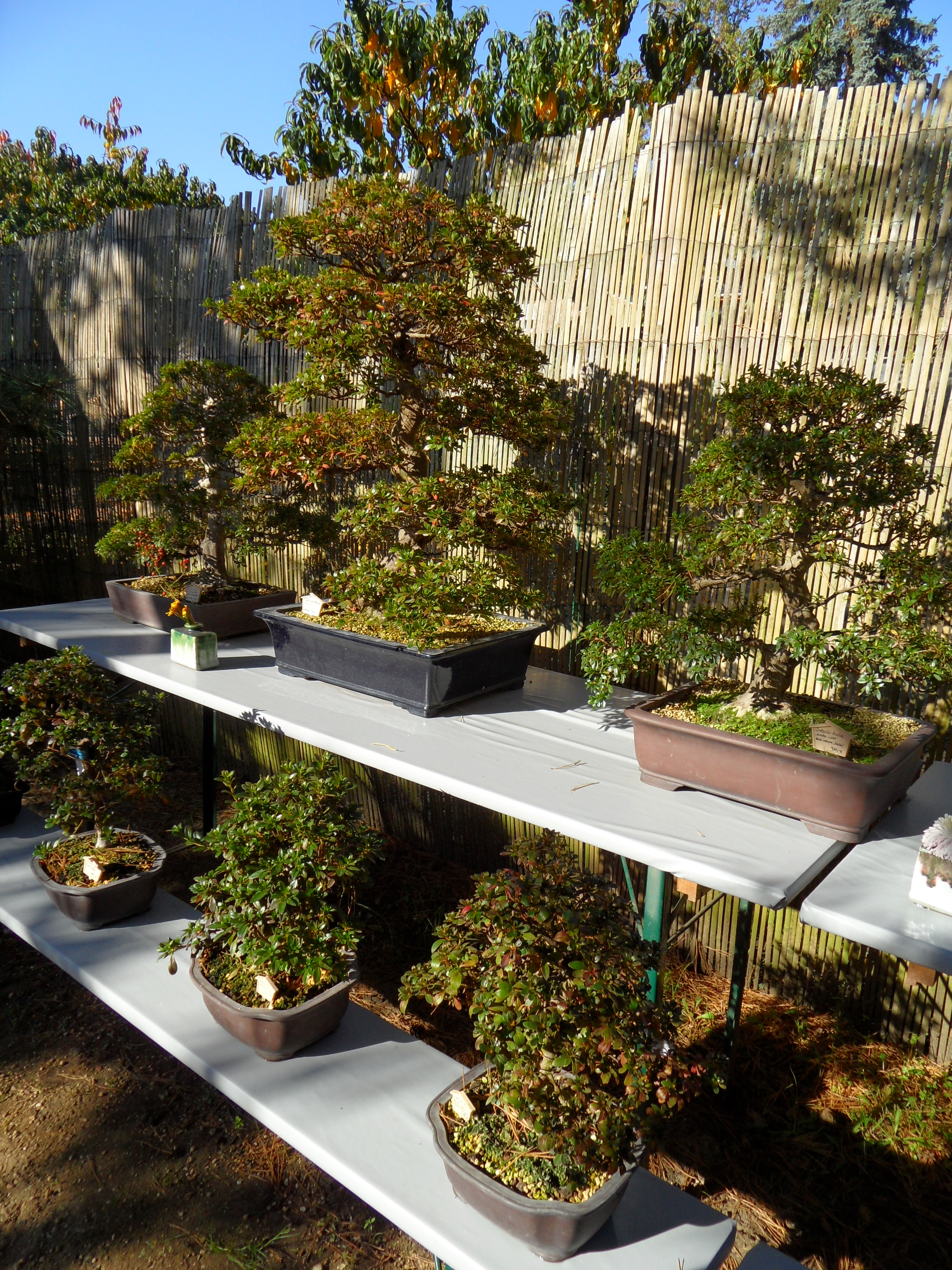 brandenburg hike tour ferch linienwitz wietkiekenberg ferch japanese bonsai garden. Black Bedroom Furniture Sets. Home Design Ideas